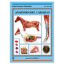 Guía. Anatomia del Caballo
